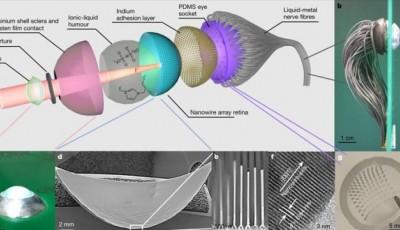 Вчені створили біонічне око, яке може працювати як справжнє
