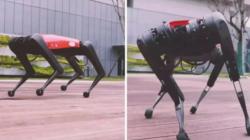 Китайская копия робота-собаки Boston Dynamics стоит в 30 раз дешевле. В чем подвох?