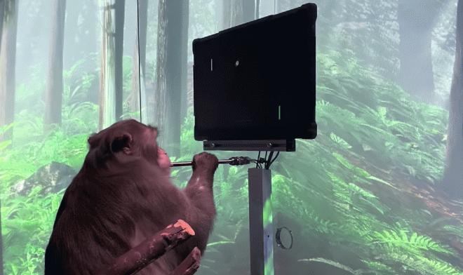 Ученые из проекта Neuralink научили обезьяну играть в Pong силой мысли